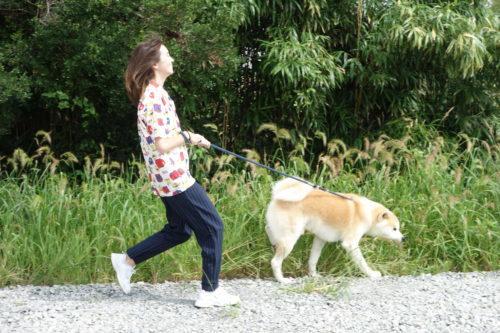 秋田犬ふれあい体験